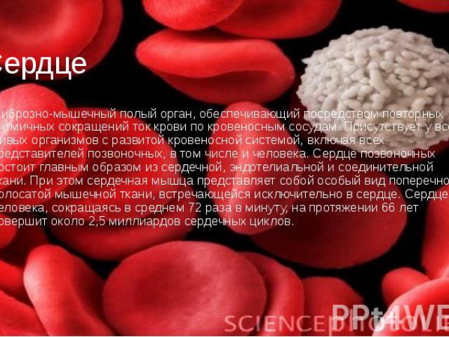 Сердце фиброзно-мышечный полый орган, обеспечивающий посредством повторных ритмичных сокращений ток крови по кровеносным сосудам. Присутствует у всех живых организмов с развитой кровеносной системой, включая всех представителей позвоночных, в том чи…