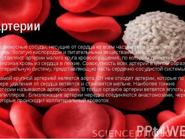 Артерии кровеносные сосуды, несущие от сердца ко всем частям тела артериальную кровь, богатую кислородом и питательными веществами. Исключение составляют артерии малого круга кровообращения, по которым движется венозная кровь из сердца в легкие. Сов…