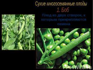 Плод из двух створок, к которым прикрепляются семена