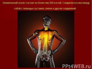 Человеческий скелет состоит из более чем 200 костей. Соединяются они между собой