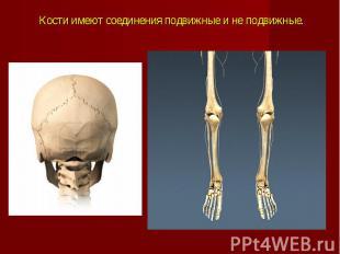 Кости имеют соединения подвижные и не подвижные.