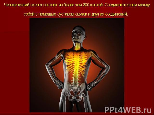 Человеческий скелет состоит из более чем 200 костей. Соединяются они между собой с помощью суставов, связок и другихсоединений.