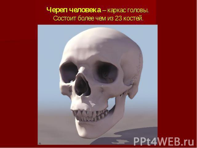 Череп человека – каркас головы. Состоит более чем из 23 костей.