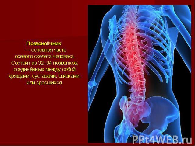 Позвоночник— основная часть осевогоскелета человека. Состоит из 32–34позвонков, соединённых между собой хрящами, суставами, связками, или сросшихся.