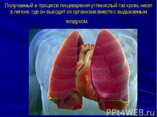 Получаемый в процессе пищеварения углекислый газ кровь несет в легкие, где он вы