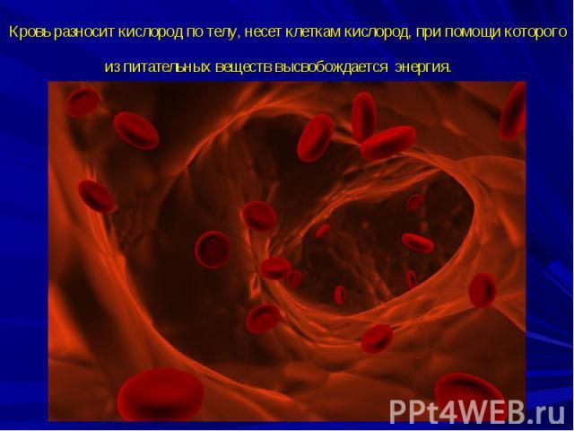Кровь разносит кислород по телу, несет клеткам кислород, при помощи которого из питательных веществ высвобождается энергия.