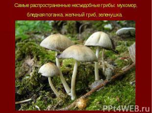 Самые распространенные несъедобные грибы: мухомор, бледная поганка, желчный гриб