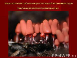 Микроскопические грибы используются в пищевой промышленности для приготовления н