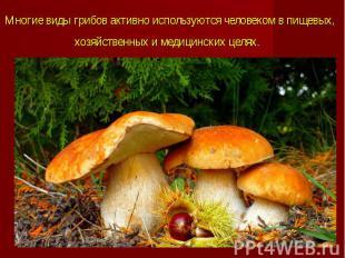 Многие виды грибов активно используютсячеловекомв пищевых, хозяйстве