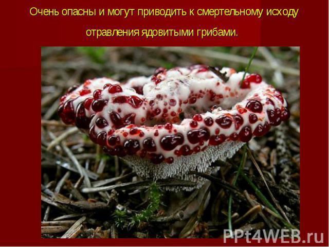 Очень опасны и могут приводить к смертельному исходу отравленияядовитыми грибами.