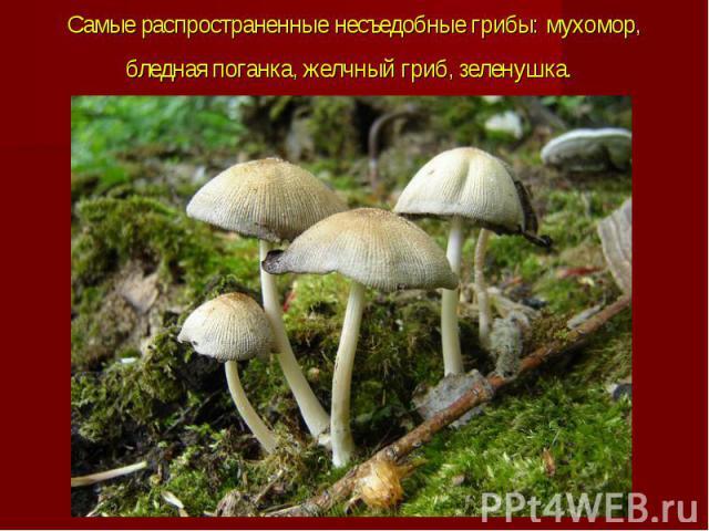 Самые распространенные несъедобные грибы: мухомор, бледная поганка, желчный гриб, зеленушка.