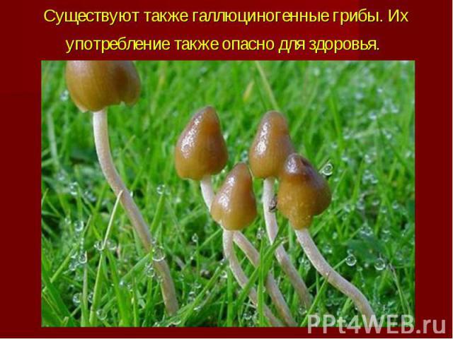 Существуют такжегаллюциногенные грибы. Их употребление также опасно для здоровья.