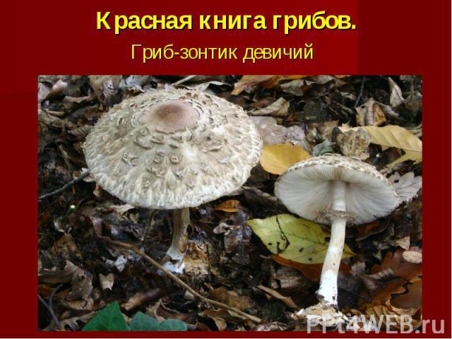 Красная книга грибов.Гриб-зонтик девичий