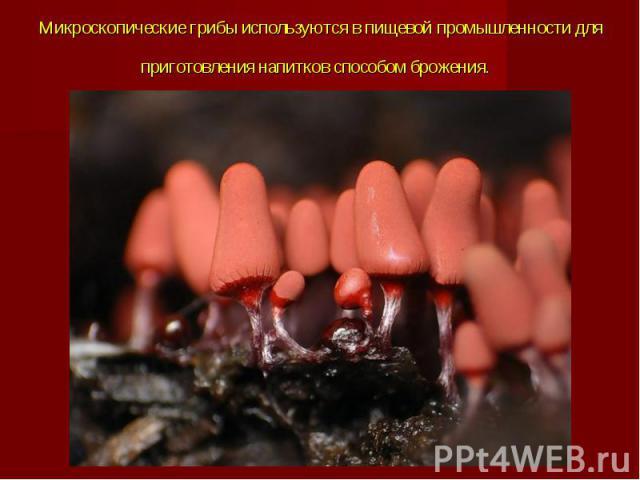 Микроскопические грибы используются в пищевой промышленности для приготовления напитков способом брожения.