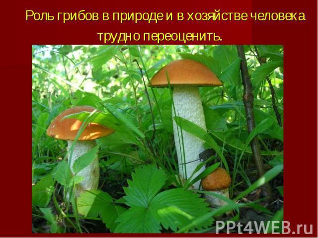 Роль грибов в природе и в хозяйстве человека трудно переоценить.