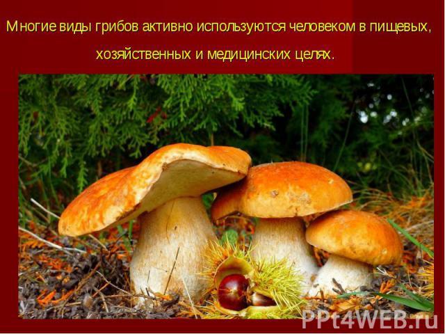 Многие виды грибов активно используютсячеловекомв пищевых, хозяйственных и медицинских целях.