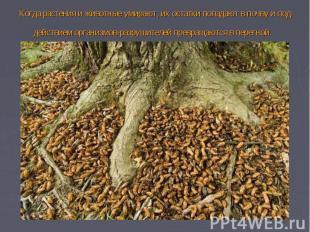 Когда растения и животные умирают, их остатки попадают в почву и под действием о