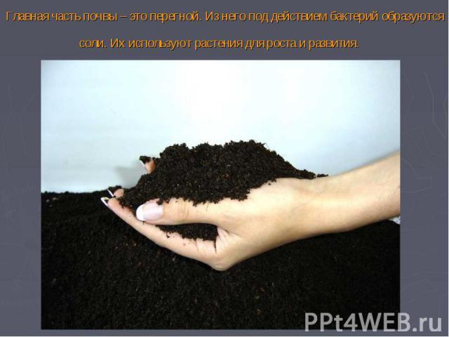 Главная часть почвы – это перегной. Из него под действием бактерий образуются соли. Их используют растения для роста и развития.