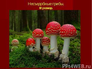 Несъедобные грибы.Мухомор.