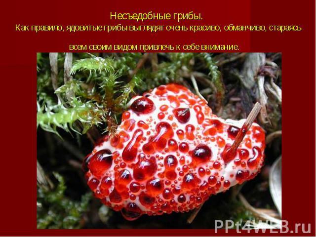 Несъедобные грибы. Как правило, ядовитые грибы выглядят очень красиво, обманчиво, стараясь всем своим видом привлечь к себе внимание.