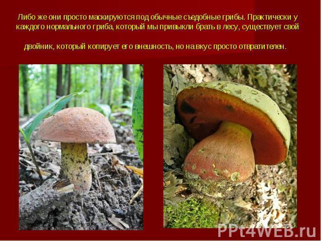 Либо же они просто маскируются под обычные съедобные грибы.Практически у каждого нормального гриба, который мы привыкли брать в лесу, существует свой двойник, который копирует его внешность, но на вкус просто отвратителен.