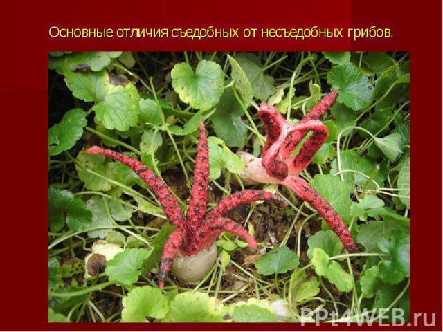 Основные отличия съедобных от несъедобных грибов.
