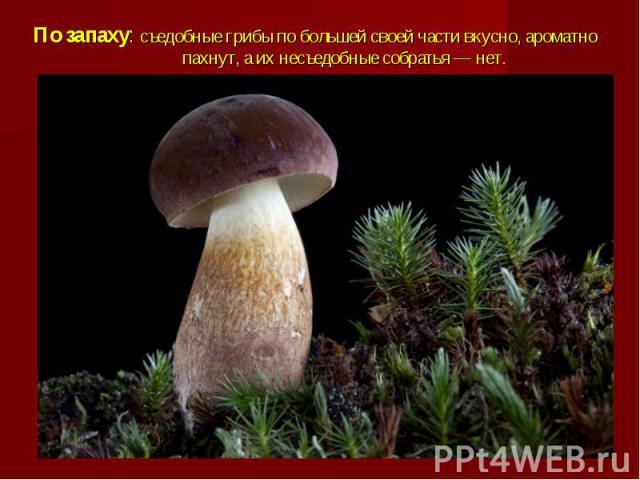 По запаху: съедобные грибы по большей своей части вкусно, ароматно пахнут, а их несъедобные собратья — нет.