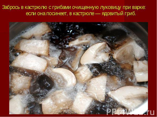 Забрось в кастрюлю с грибами очищеннуюлуковицупри варке: если она посинеет, в кастрюле — ядовитый гриб.