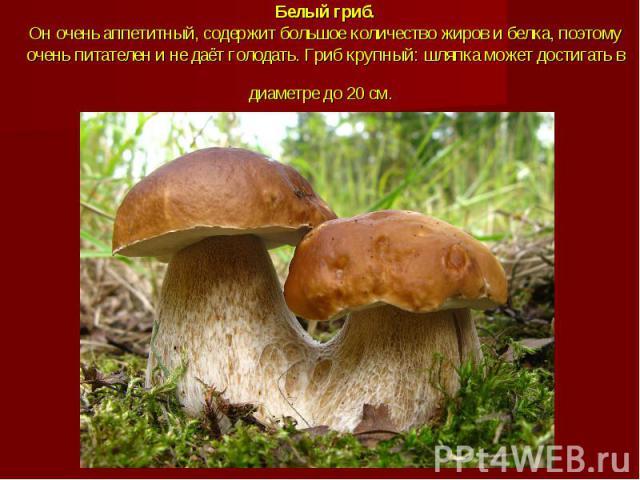 Белый гриб.Он очень аппетитный, содержит большое количество жиров и белка, поэтому очень питателен и не даёт голодать. Гриб крупный: шляпка может достигать в диаметре до 20 см.