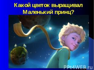 Какой цветок выращивал Маленький принц?