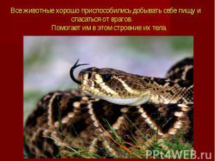 Все животные хорошо приспособились добывать себе пищу и спасаться от врагов. Пом