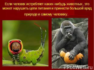 Если человек истребляет каких-нибудь животных, это может нарушить цепи питания и