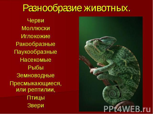 Разнообразие животных.ЧервиМоллюскиИглокожиеРакообразныеПаукообразныеНасекомыеРыбыЗемноводныеПресмыкающиеся, или рептилии,ПтицыЗвери