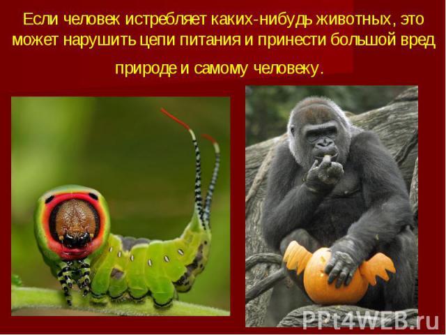 Если человек истребляет каких-нибудь животных, это может нарушить цепи питания и принести большой вред природе и самому человеку.