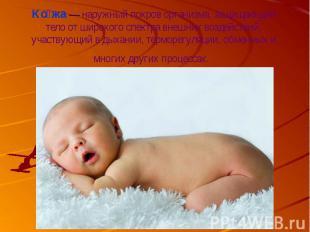 Кожа— наружный покров организма, защищающий тело от широкого спектра внешн