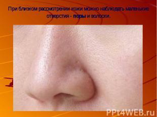При близком рассмотрении кожи можно наблюдать маленькие отверстия - поры и волос