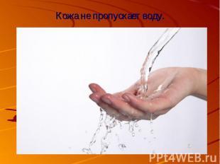 Кожа не пропускает воду.