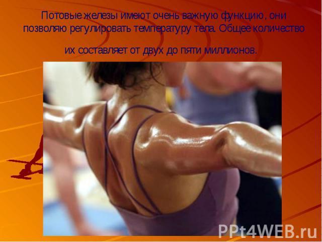 Потовые железыимеют очень важную функцию, они позволяю регулировать температуру тела. Общее количество их составляет от двух до пяти миллионов.
