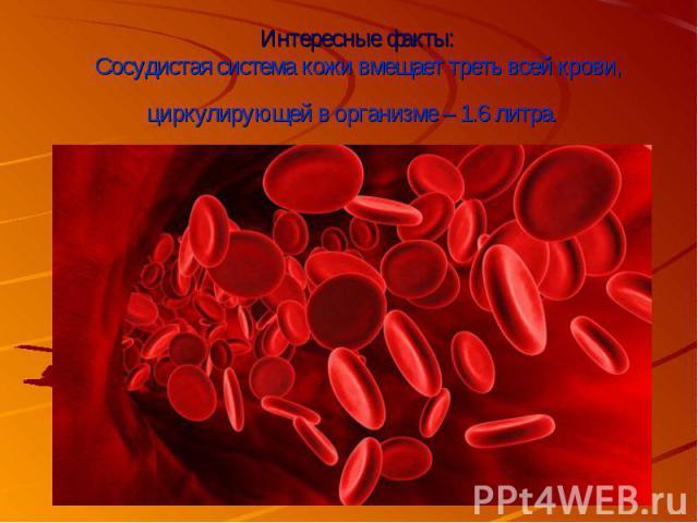 Интересные факты:Сосудистая система кожи вмещает треть всей крови, циркулирующей в организме – 1.6 литра.