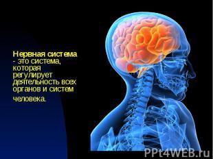 Нервная система - это система, которая регулирует деятельность всех органов и си