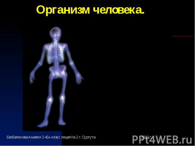 Организм человека.Безбалинова Амалия 3 «Б» класс лицея № 2 г. Сургута 2013 г.