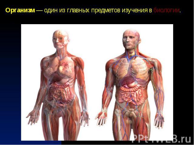 Организм— один из главных предметов изучения вбиологии.