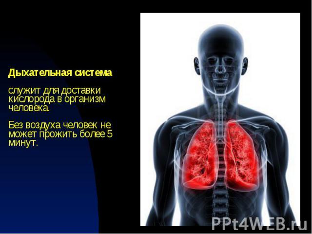 Дыхательная система служит для доставки кислорода в организм человека. Без воздуха человек не может прожить более 5 минут.