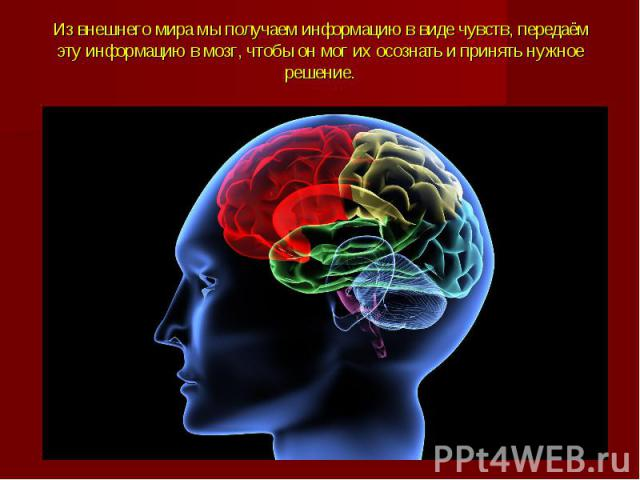 Из внешнего мира мы получаем информацию в виде чувств, передаём эту информацию в мозг, чтобы он мог их осознать и принять нужное решение.