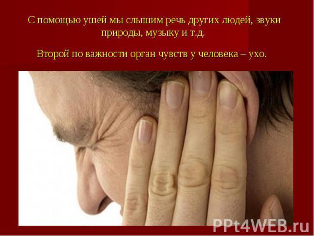 С помощью ушей мы слышим речь других людей, звуки природы, музыку и т.д. Второй по важности орган чувств у человека – ухо.