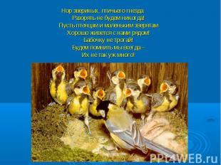 Нор звериных, птичьего гнезда Разорять не будем никогда! Пусть птенцам и маленьк