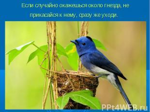Если случайно окажешься около гнезда, не прикасайся к нему, сразу же уходи.