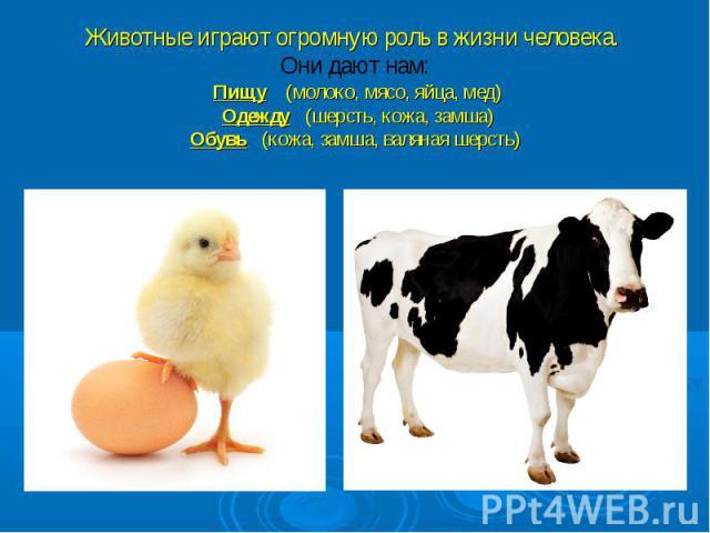 Животные играют огромную роль в жизни человека. Они дают нам: Пищу (молоко, мясо, яйца, мед) Одежду (шерсть, кожа, замша) Обувь (кожа, замша, валяная шерсть)