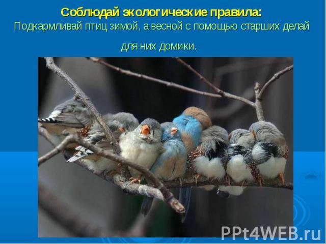 Соблюдай экологические правила:Подкармливай птиц зимой, а весной с помощью старших делай для них домики.