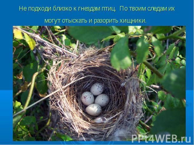 Не подходи близко к гнездам птиц. По твоим следам их могут отыскать и разорить хищники.